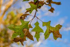 Signs of Change (Greg Jarman) Tags: olympus omd em1 40150 nature plants closeup macro micro four thirds