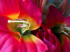 Flors obertes