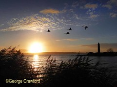 Pencil Sunset Swans (g crawford) Tags: ayrshire northayrshire crawford clyde riverclyde firthofclyde sea seaside water largs pencil viking battleoflargs 1263 sunset sundownskies sky evening weather cloud clouds swan swans silhouette gloaming twilight