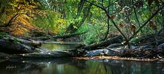 """""""German jungle"""" (fotobagaluten.de) Tags: natural natürlich landscape landschaft river creek flus bach fluslandschaft forest wald autumn herbst water wasser lzb langzeitbelichtung longexposure fotobagalutende"""