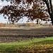 Tree, Track, Field