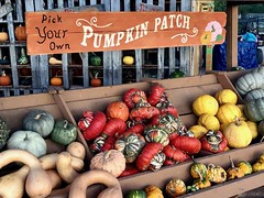 Pumpkin Patch (joncutrer) Tags: farmersmarket jcutrer market wagon vegetables autumn colorful festive november groud squash farm patch cart pumpkin fall