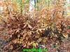 "2018-11-07               Baarn SOP           25 Km  (15) • <a style=""font-size:0.8em;"" href=""http://www.flickr.com/photos/118469228@N03/45726839292/"" target=""_blank"">View on Flickr</a>"