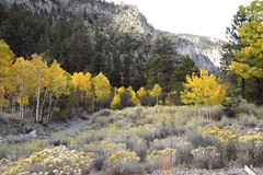 Autumn in the Mountain Meadow (~~J) Tags: yellow autumn fall leaves rocks sage flowers nature green