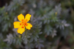 DSC09443 (Old Lenses New Camera) Tags: sony a7r pentax 100mm f28 macro plants garden smcpentaxfa flowers