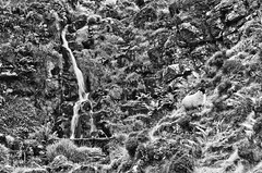 Blend into the backround (zdenisaba) Tags: water waterfall rocks sheep nature landscape land scotland monochrome fern surroundings grass mountain