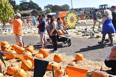 DSC_2544 (earthdog) Tags: 2018 needstags needstitle nikon d5600 nikond5600 18300mmf3563 fall autumn pumpkinpatch spinafarms farm