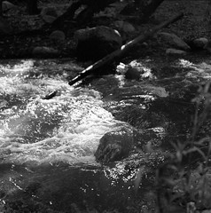 Stream (Squid Files) Tags: tmax tmax400 kodak hasselblad 500 cm san diego california