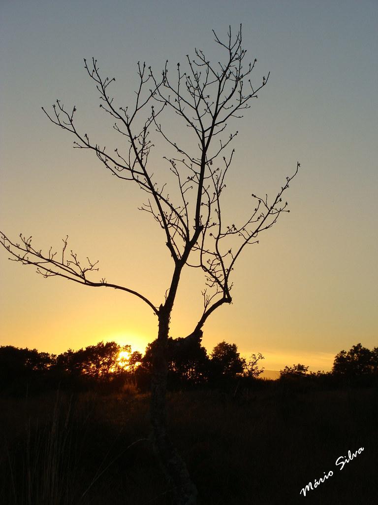 Águas Frias (Chaves) - ... pôr do sol e árvore desnudada ...
