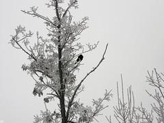 99563290 (aniaerm) Tags: snow ice frost
