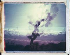 (Joann Edmonds) Tags: roidweek polaroidweek polaroid instantfilm packfilm peelapartfilm expiredfilm 669 land450 multipleexposure doubleexposure joshuatree nationalpark jtnp nature abstract abstractnature