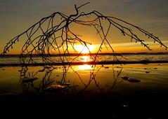 IMG_0064x (gzammarchi) Tags: specialexbarbara italia paesaggio natura mare ravenna lidodidante alba sole cespuglio monocrome