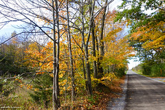 Snider Road (gabi-h) Tags: autumn fall fallfoliage sniderroad trees road gabih princeedwardcounty woods october rural sideroad