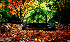 Dreamy November Scene (Hi-Fi Fotos) Tags: fall autumn scene landscape steps stairs trellis leaves november color season trees woods forest enchanted quiet solitude empty alone sigma 18250 nikon d7200 dx hififotos hallewell magic