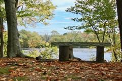Memorial Bench (Read2me) Tags: autumn tcfe cye trees leaves jacobspond bench friendlychallengeswinner seat perpetualchallengewinner gamewinner challengeclubwinner pregamesweepwinner duele