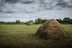 Harvesting lies in stacks for the winter. Manual hay harvesting (ivan_volchek) Tags: agriculture bale cloud clouds country countryside crop environment farm field flora grass grassland green harvest hay hayfield haystack landscape meadow nature outdoors rural scenic sky soil straw summer tree