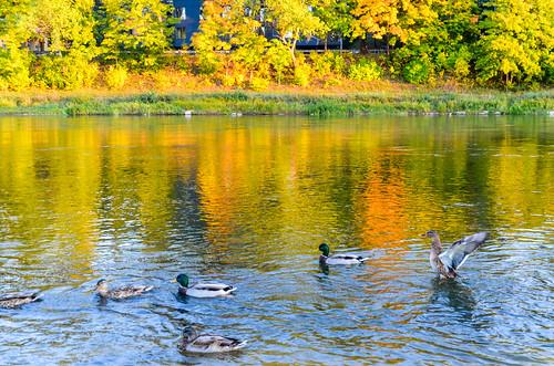 Neris river, Vilnius