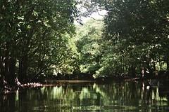 creek, Iriomote (Vinzent M) Tags: japan 日本 leica r r4 elmarit 35 agfa vista zniv iriomote 西表島