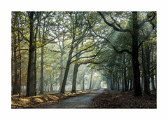La foret enchantée-2060125A2060 (helenea-78) Tags: bois fort nature brumes forêt rayonsdesoleil brume espacerambouillet trail