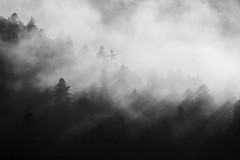 Quelque part en France (Thomas Vanderheyden) Tags: noiretblanc blackandwhite nature beautifulearth fog brume massifdesvosges france mountain tree arbre montagne paysage landscape thomasvanderheyden fujifilm