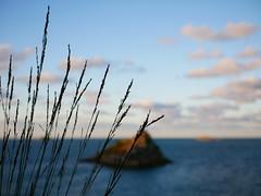 (An Arzhig) Tags: île island bretagne france finistère panasonic lumix gx800 carantec 50mm