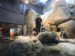 DSCN2418 (littlereview) Tags: carolinas littlereview 2018 travel museum animal aquarium penguin blog