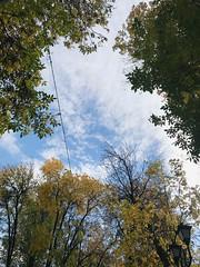 autumn sky (millenks) Tags: vitebsk belarus city autumn autumnmood fall nature beautyofnature yellow orange trees tree park october sky clouds витебск беларусь небо осень