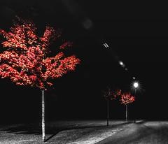 ... (st.weber71) Tags: nikon nrw niederrhein natur nightshot nachts nightlights nachtfotografie nacht nachtaufnahme night nachtfoto bäume colorkey d850 langzeitbelichtung lzb lichter licht art