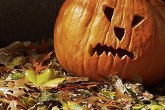 Eroe per un giorno / Hero for one day (Boston, Massachusets, United States) (AndreaPucci) Tags: jackolantern boston massachusetts usa halloween carved pumpkin night andreapucci autumn