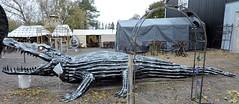Crocodile (Will S.) Tags: mypics porthope ontario canada primitivedesigns art sculpture robot autoparts