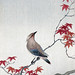 Bird on an Autumnal Maple