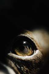 (Rebecca812) Tags: detail dog eye bostonterrier shadow light canon animals pets rebeccanelson rebecca812
