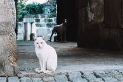 Valpaços (wilsontmg) Tags: valpaços cat dog street streetphoto streetphotography fujifilm fujifilmxseries fujixseries fujifilmxt2 ishootfujix xt2 xf56mm