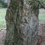 stone thumbnail