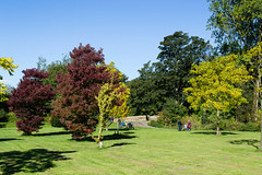 Autumn colours - Sept. 2018 (I.T.P.) Tags: autumn colours towneley park trees lancashire