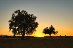 Sunset in Cyprus (4) (Polis Poliviou) Tags: nature green tree wood root agriculture plant outdoors cyprustheallyearroundisland cyprusinyourheart yearroundisland zypern republicofcyprus ©polispoliviou2018 polispoliviou polis poliviou πολυσ πολυβιου leaf field mediterranean oleaeuropaea sunsetincyprus flora grass environment healthy beauty afiap motherearth art agricultural soil texture rough postcard brunch grey brown season countryside organic ecology ecological winter lovecyprus autumn olivo ulivo sunlight light sun sunset sunrise fall