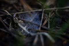Herbst (Ina Hain) Tags: alpha6000 sony pentacon1850 nass dark dunkel filzen moor moos wald spinnweben tau herbst