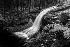 Stream of Consciousness BW (Simmie | Reagor - Simmulated.com) Tags: ashfield cascade chapel brook falls connecticut photographer d750 fall forest landscape long exposure massachusetts nature nikon northeast outdoor outdoors park river rock september stone stream tree usa beautiful cascading cataract creek digital drop flow flowing fluid fresh freshness motion natural north america overcast powerful pure ripple scenery scenic speed splash torrent tourism travel water waterfall wet blackandwhite