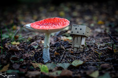IMG_0052-1 (Wayne Cappleman (Haywain Photography)) Tags: wayne cappleman haywain photography portrait photographer farnborough hampshire mushroom danbo fly agaric