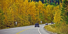 FALL CRUISE HOME (shoebox50) Tags: fall autumn yellow orange green crowsnesthighway canada canons120 pointandshoot inexplore