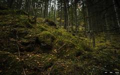 Urskog-3876 (jarud) Tags: 2018 norge norway notodden urskog