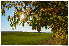 Goldener Oktober (schmilar77) Tags: pflanzen landschaft sonne jahreszeit herbst feld bildbeschreibung blatt natur gegenlicht leinefeldeworbis thüringen deutschland