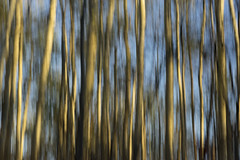 _DSC4537 (Tracy Metz) Tags: icm intentionalcameramovement nature trees