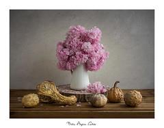 Bodegón con calabazas (.... belargcastel ....) Tags: bodegón still stilllife flores flowers texturas españa spain galicia belargcastel belénargüeso o