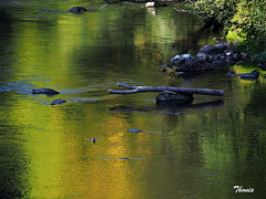 Rio Garona (Gatodidi) Tags: rio garona riu garonne pirineos francés francia france verde troncos arboles naturaleza natura landscape paisaje foix