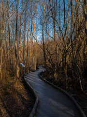 Curves Around the Forest (Elzyy) Tags: landscape forest trail trees winter boardwalk orange morning sunrise wide angle sky leaf leaves nature park walkway weather shadows sunset evening light