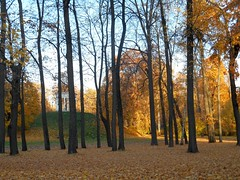 Осень в парке Останкино (SVOknaVDNH) Tags: фотография осень паркостанкино деревья природа пейзаж пруд вода дорожка утро москва photo autumn ostankinopark trees nature landscape pond water parkpath moscow morning