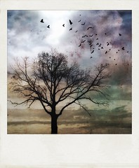 October skies. (jeanne.marie.) Tags: mydailywalk polaroid colorful flight flying textured clouds autumn silhouettes tree birds iphone7plus iphoneography funwithfilters