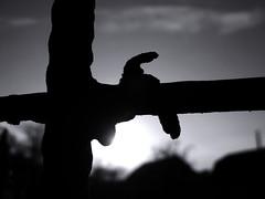 Sunrise. (ALEKSANDR RYBAK) Tags: восход монохромный утро свежесть солнце солнечный свет небо облака ограда крупный план sunrise monochrome morning freshness sun solar shine sky clouds fence closeup