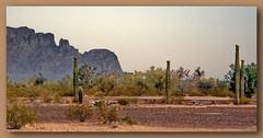 Senoran Desert of the American Southwest (robinb44) Tags: saguarocactus carnegieagigantea cactuses cholla cylindropuntiaspp beavertail opuntiabasilaris hedgehog echinocereusspp fishhook ferocactuswislizeni pricklypear opuntiaspp nightbloomingcereus peniocereusspp organpipe stenocereus thurberi cacti usa senorandesert arizonacalifornia suguaronationalpark southwest